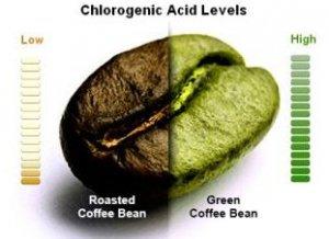 green coffee indonesia